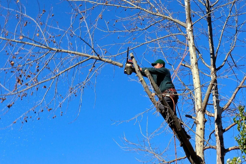Contact Us-Dayton Tree Trimming and Stump Grinding Services-We Offer Tree Trimming Services, Tree Removal, Tree Pruning, Tree Cutting, Residential and Commercial Tree Trimming Services, Storm Damage, Emergency Tree Removal, Land Clearing, Tree Companies, Tree Care Service, Stump Grinding, and we're the Best Tree Trimming Company Near You Guaranteed!