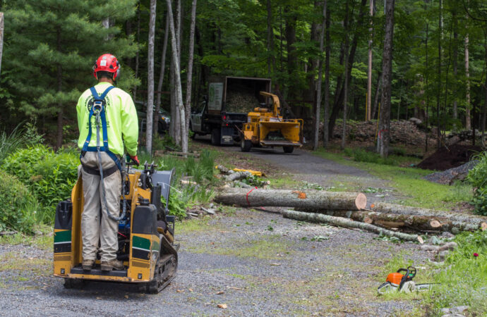 Emergency Tree Removal-Dayton Tree Trimming and Stump Grinding Services-We Offer Tree Trimming Services, Tree Removal, Tree Pruning, Tree Cutting, Residential and Commercial Tree Trimming Services, Storm Damage, Emergency Tree Removal, Land Clearing, Tree Companies, Tree Care Service, Stump Grinding, and we're the Best Tree Trimming Company Near You Guaranteed!