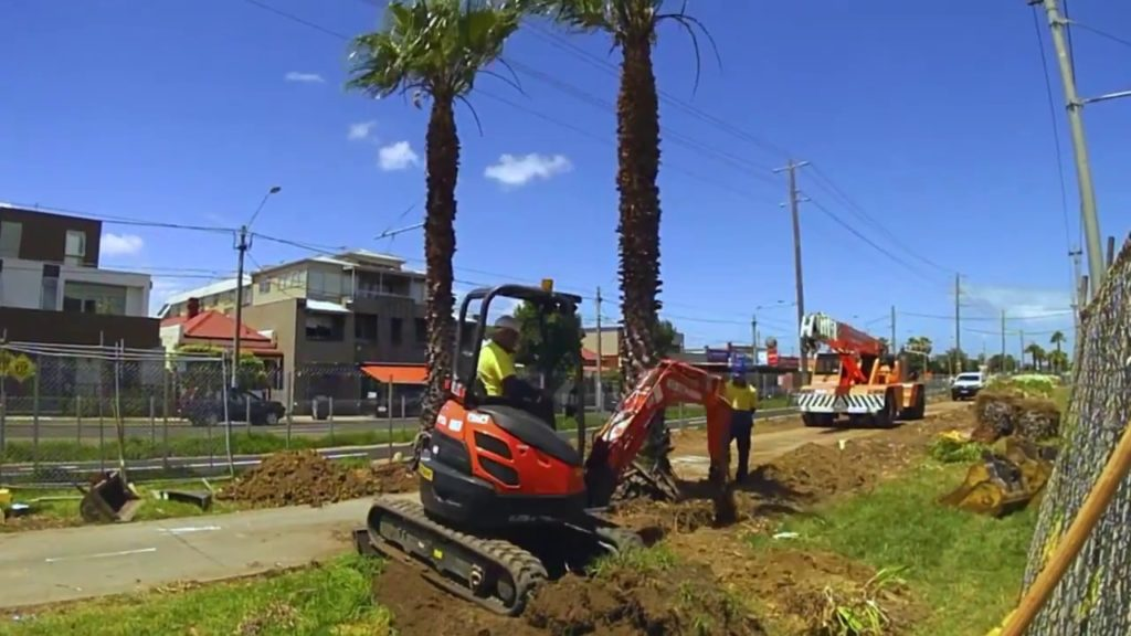 Palm Tree Removal-Dayton Tree Trimming and Stump Grinding Services-We Offer Tree Trimming Services, Tree Removal, Tree Pruning, Tree Cutting, Residential and Commercial Tree Trimming Services, Storm Damage, Emergency Tree Removal, Land Clearing, Tree Companies, Tree Care Service, Stump Grinding, and we're the Best Tree Trimming Company Near You Guaranteed!