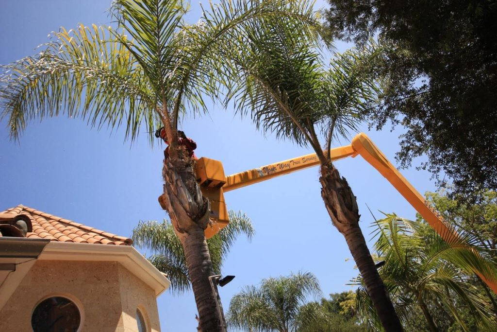 Palm Tree Trimming-Dayton Tree Trimming and Stump Grinding Services-We Offer Tree Trimming Services, Tree Removal, Tree Pruning, Tree Cutting, Residential and Commercial Tree Trimming Services, Storm Damage, Emergency Tree Removal, Land Clearing, Tree Companies, Tree Care Service, Stump Grinding, and we're the Best Tree Trimming Company Near You Guaranteed!