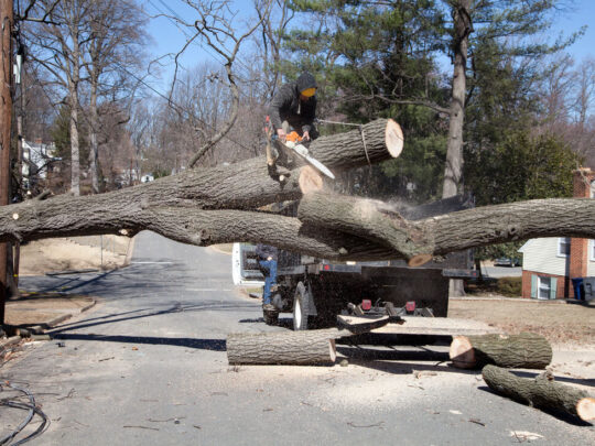 Residential Tree Services-Dayton Tree Trimming and Stump Grinding Services-We Offer Tree Trimming Services, Tree Removal, Tree Pruning, Tree Cutting, Residential and Commercial Tree Trimming Services, Storm Damage, Emergency Tree Removal, Land Clearing, Tree Companies, Tree Care Service, Stump Grinding, and we're the Best Tree Trimming Company Near You Guaranteed!