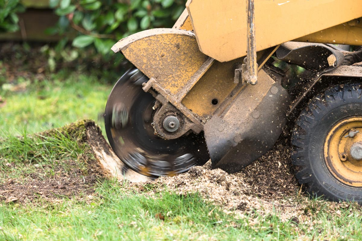 Stump Grinding-Dayton Tree Trimming and Stump Grinding Services-We Offer Tree Trimming Services, Tree Removal, Tree Pruning, Tree Cutting, Residential and Commercial Tree Trimming Services, Storm Damage, Emergency Tree Removal, Land Clearing, Tree Companies, Tree Care Service, Stump Grinding, and we're the Best Tree Trimming Company Near You Guaranteed!