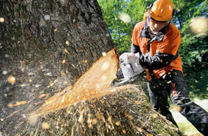 Tree Cutting-Dayton Tree Trimming and Stump Grinding Services-We Offer Tree Trimming Services, Tree Removal, Tree Pruning, Tree Cutting, Residential and Commercial Tree Trimming Services, Storm Damage, Emergency Tree Removal, Land Clearing, Tree Companies, Tree Care Service, Stump Grinding, and we're the Best Tree Trimming Company Near You Guaranteed!