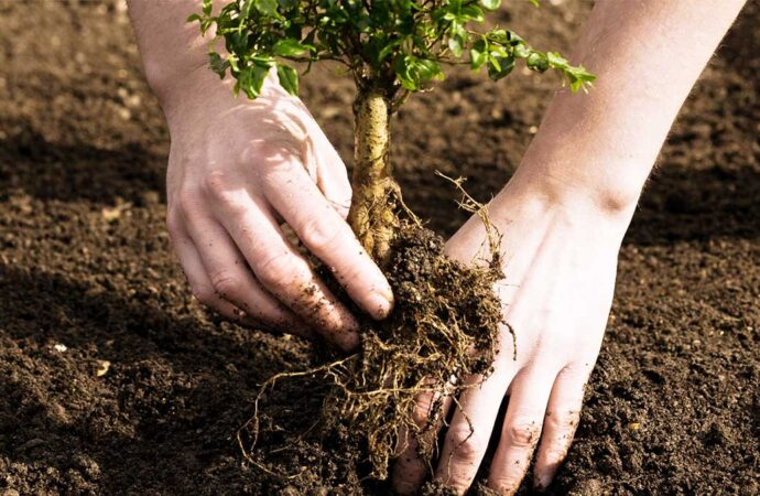Tree Planting-Dayton Tree Trimming and Stump Grinding Services-We Offer Tree Trimming Services, Tree Removal, Tree Pruning, Tree Cutting, Residential and Commercial Tree Trimming Services, Storm Damage, Emergency Tree Removal, Land Clearing, Tree Companies, Tree Care Service, Stump Grinding, and we're the Best Tree Trimming Company Near You Guaranteed!