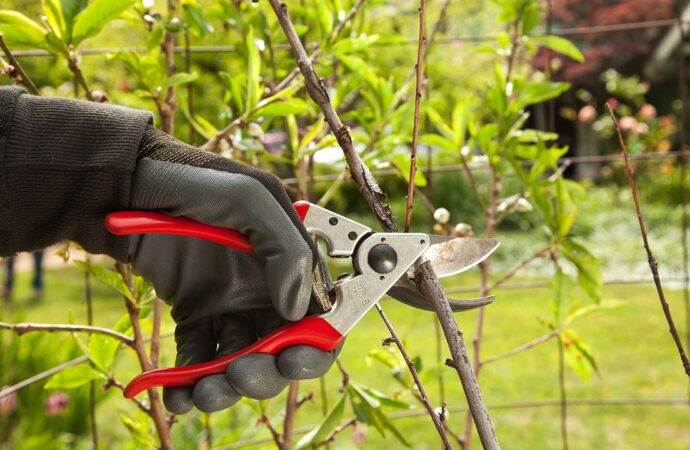 Tree Pruning-Dayton Tree Trimming and Stump Grinding Services-We Offer Tree Trimming Services, Tree Removal, Tree Pruning, Tree Cutting, Residential and Commercial Tree Trimming Services, Storm Damage, Emergency Tree Removal, Land Clearing, Tree Companies, Tree Care Service, Stump Grinding, and we're the Best Tree Trimming Company Near You Guaranteed!