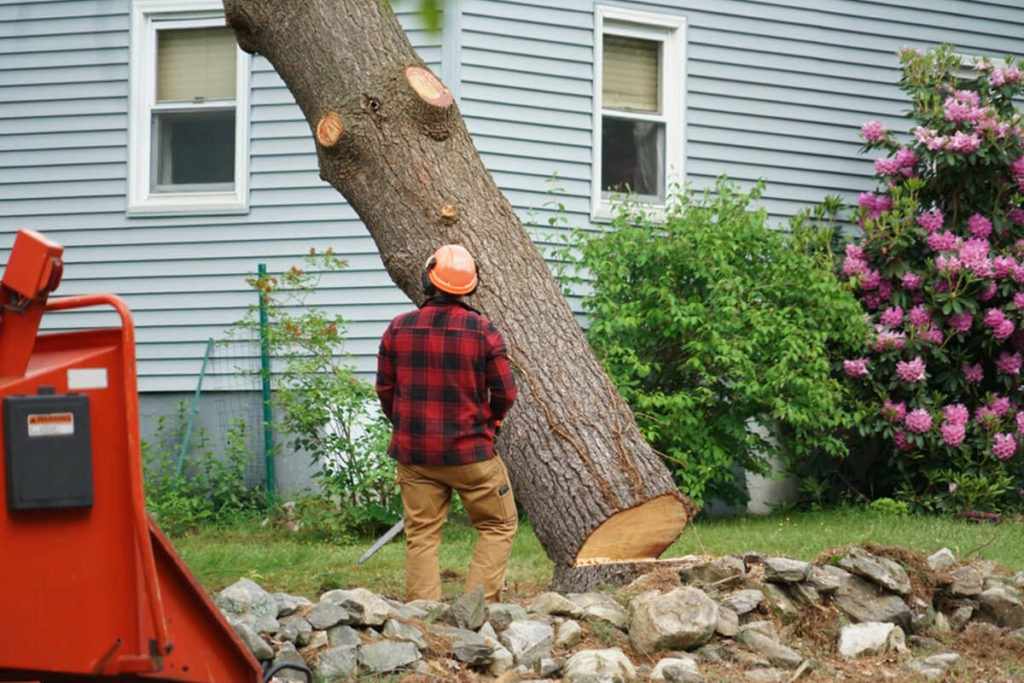Tree Removal-Dayton Tree Trimming and Stump Grinding Services-We Offer Tree Trimming Services, Tree Removal, Tree Pruning, Tree Cutting, Residential and Commercial Tree Trimming Services, Storm Damage, Emergency Tree Removal, Land Clearing, Tree Companies, Tree Care Service, Stump Grinding, and we're the Best Tree Trimming Company Near You Guaranteed!