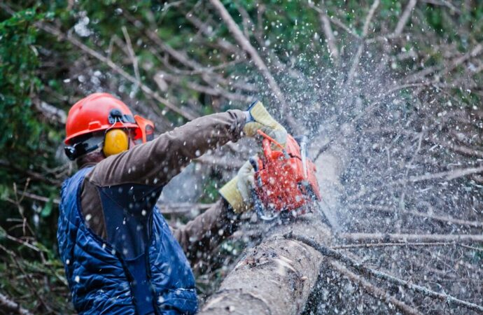 Kettering-Dayton Tree Trimming and Stump Grinding Services-We Offer Tree Trimming Services, Tree Removal, Tree Pruning, Tree Cutting, Residential and Commercial Tree Trimming Services, Storm Damage, Emergency Tree Removal, Land Clearing, Tree Companies, Tree Care Service, Stump Grinding, and we're the Best Tree Trimming Company Near You Guaranteed!