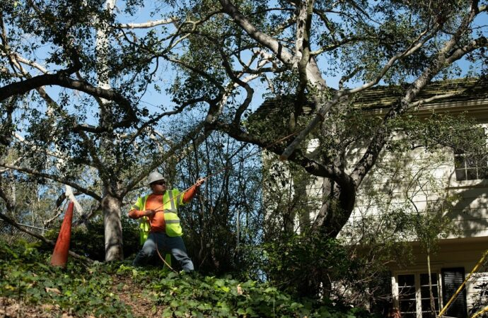 New Lebanon-Dayton Tree Trimming and Stump Grinding Services-We Offer Tree Trimming Services, Tree Removal, Tree Pruning, Tree Cutting, Residential and Commercial Tree Trimming Services, Storm Damage, Emergency Tree Removal, Land Clearing, Tree Companies, Tree Care Service, Stump Grinding, and we're the Best Tree Trimming Company Near You Guaranteed!